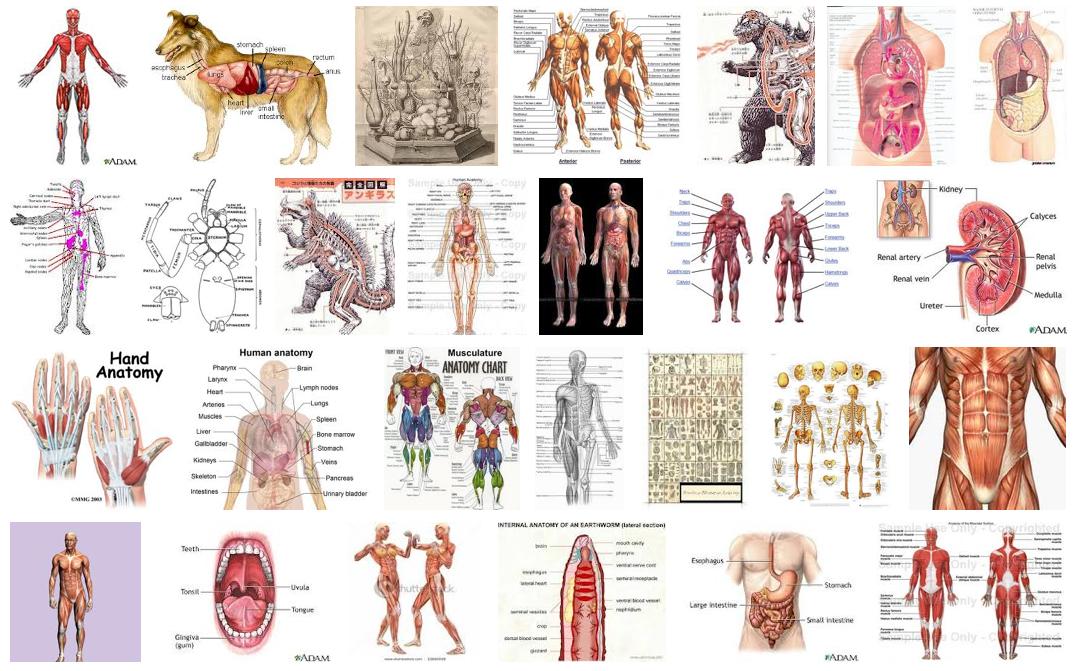 anatomy | theDiagonal