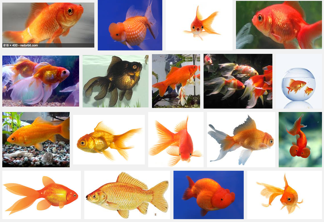 google-search-goldfish