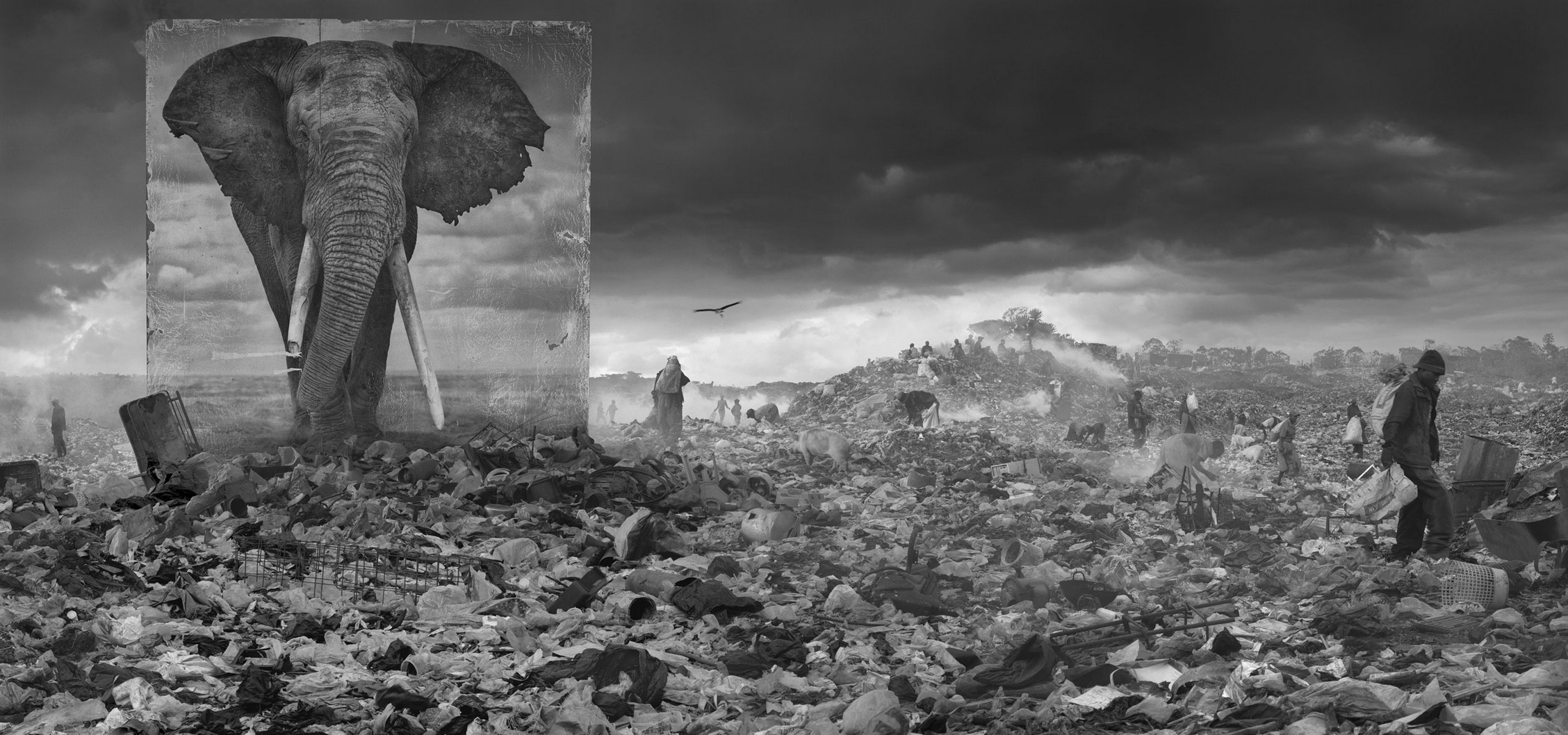 Wasteland with elephant - Nick Brandt